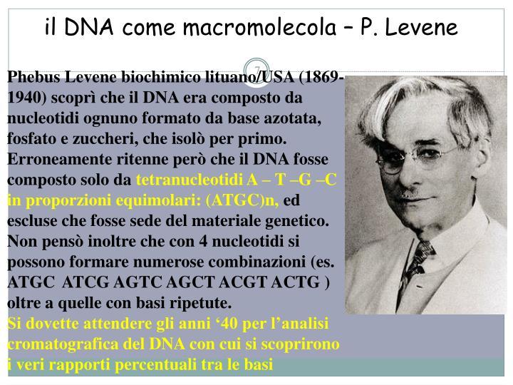 il DNA come macromolecola – P. Levene