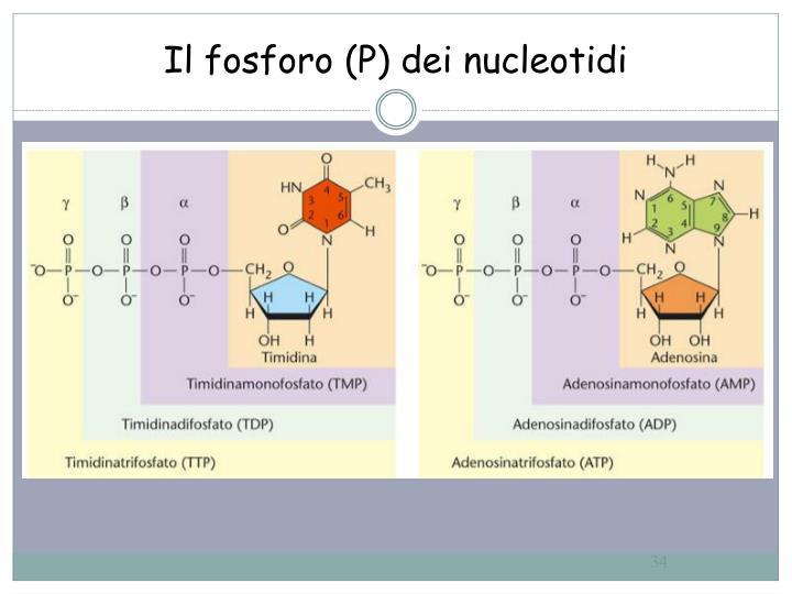 Il fosforo (P) dei nucleotidi