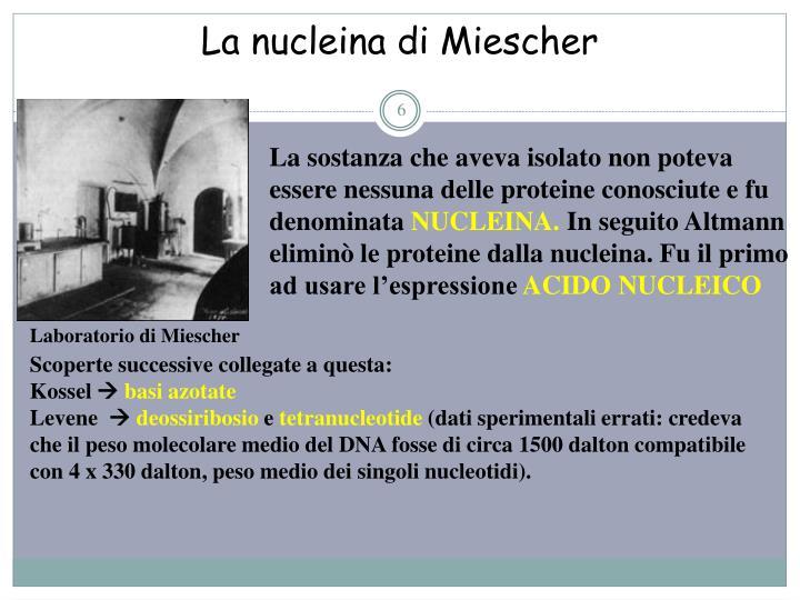 La nucleina di Miescher