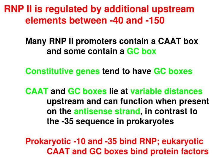 RNP II is regulated by additional upstream elements between -40 and -150