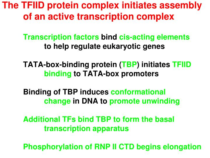 The TFIID protein complex initiates assembly of an active transcription complex