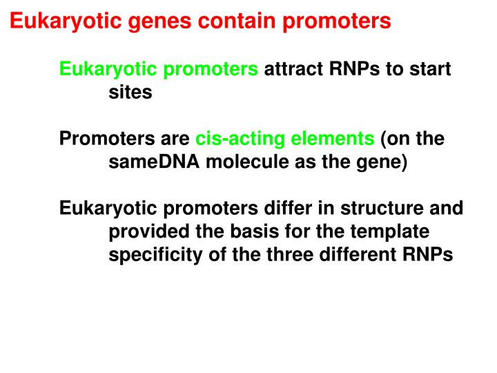 Eukaryotic genes contain promoters