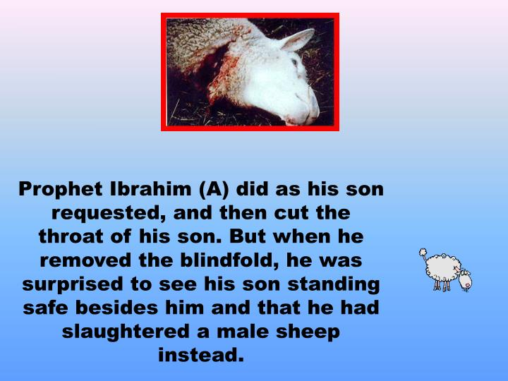 Prophet Ibrahim (A) did as his son requested, and then cut the throat of his son. But when he removed the blindfold, he was surprised to see his son standing safe besides him and that he had slaughtered a male sheep instead.