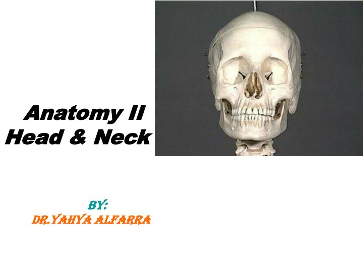 anatomy ii head neck by dr yahya alfarra n.