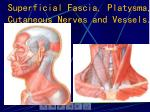 superficial fascia platysma cutaneous nerves and vessels