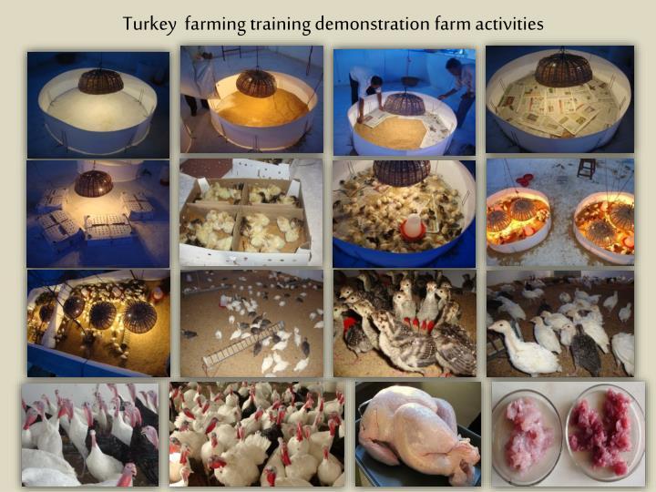 Turkey farming training demonstration farm activities