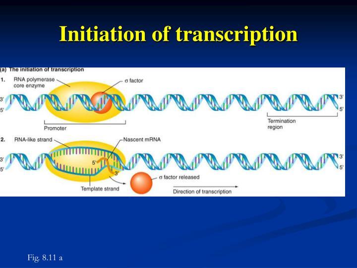 Initiation of transcription
