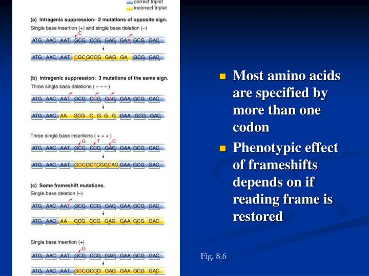 Most amino acids are specified by more than one codon