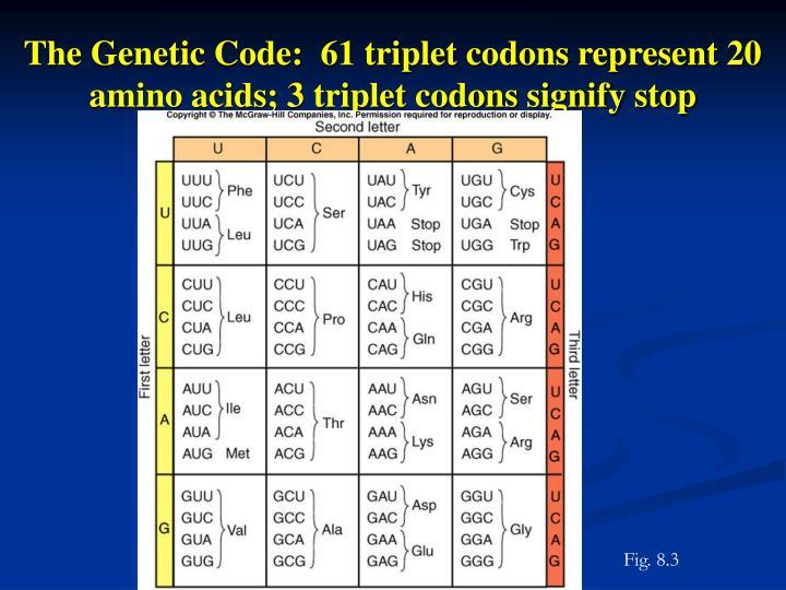 The Genetic Code:  61 triplet codons represent 20 amino acids; 3 triplet codons signify stop