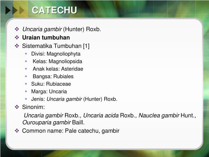 CATECHU