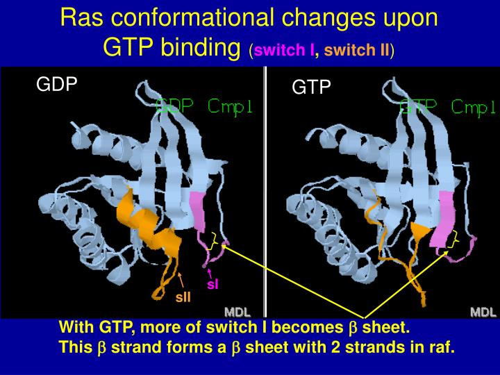 Ras conformational changes upon GTP binding