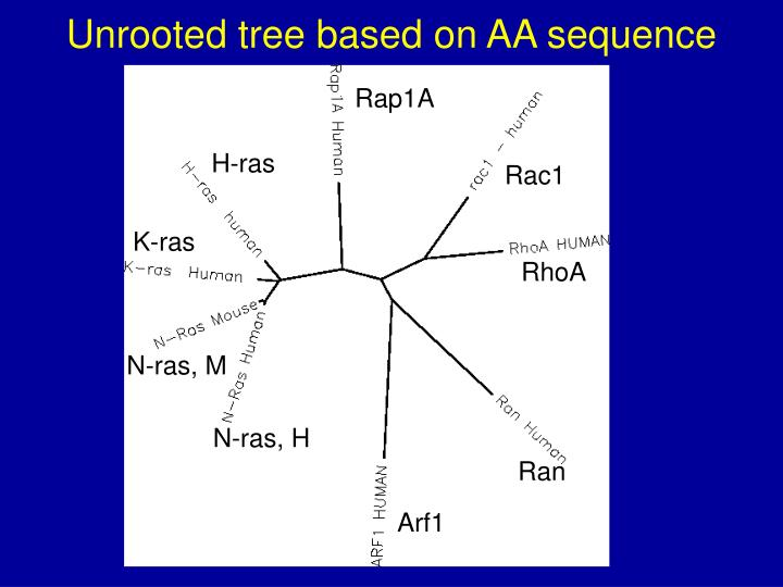 Unrooted tree based on AA sequence