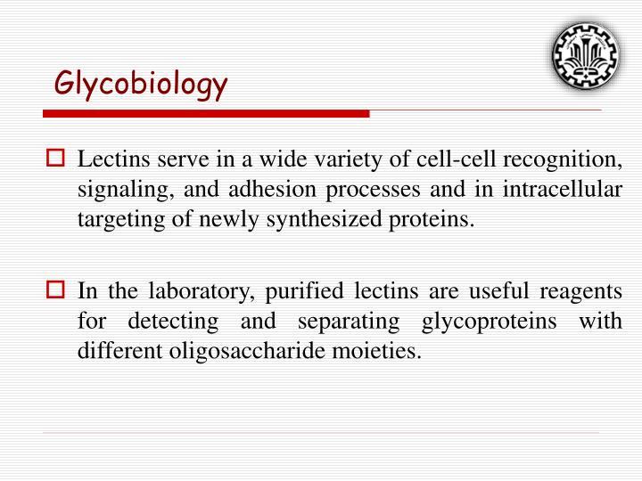 Glycobiology
