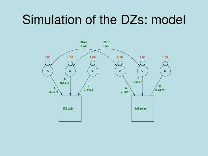 Simulation of the DZs: model