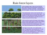 rain forest layers