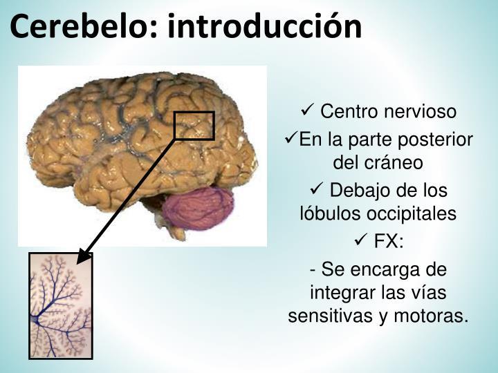 Cerebelo: introducción