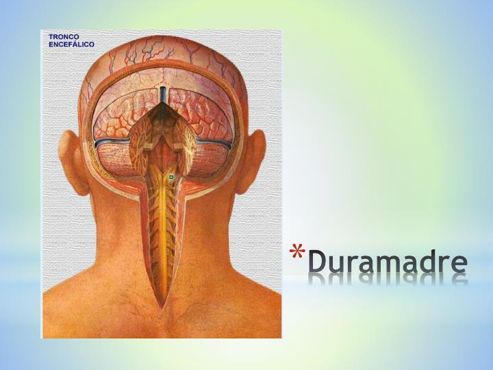 Duramadre