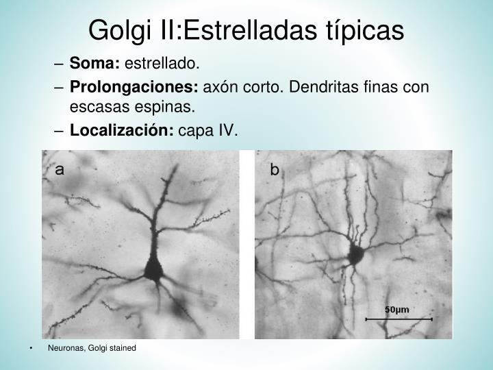 Golgi