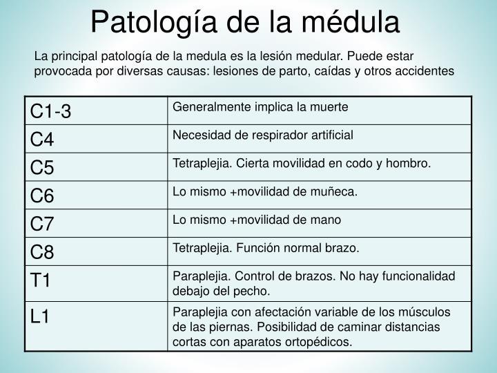 Patología de la médula