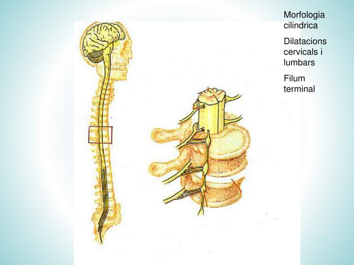 Morfologia cilindrica