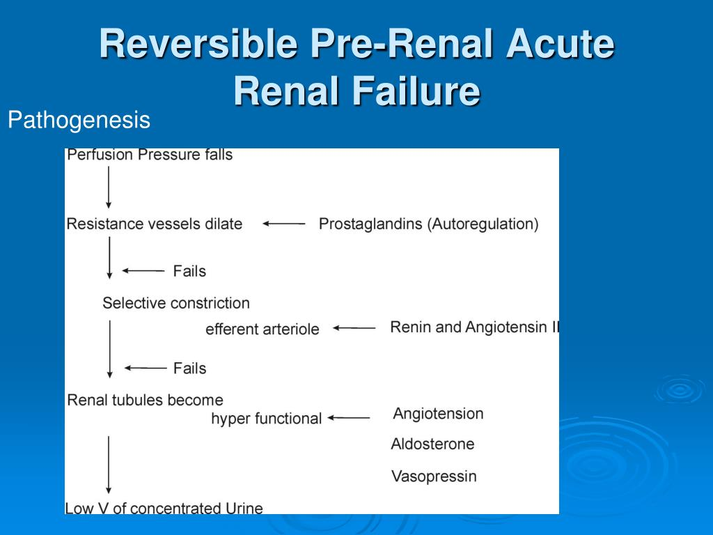 Ppt Acute Renal Failture Powerpoint Presentation Free Download Id 5137752