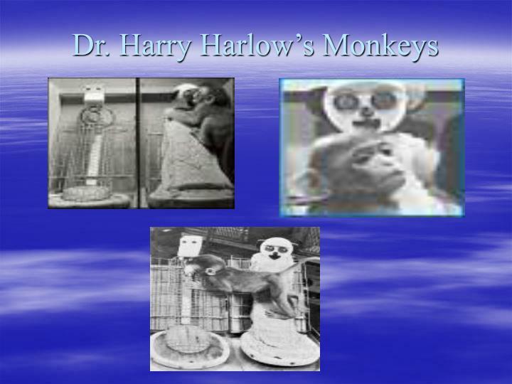 Dr. Harry Harlow's Monkeys