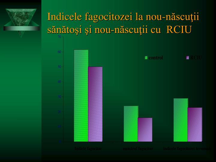 Indicele fagocitozei la nou-născuţii sănătoşi şi nou-născuţii cu  RCIU