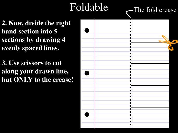 The fold crease