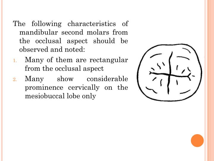 The following characteristics of mandibular second molars from the occlusal aspect should be observed and noted: