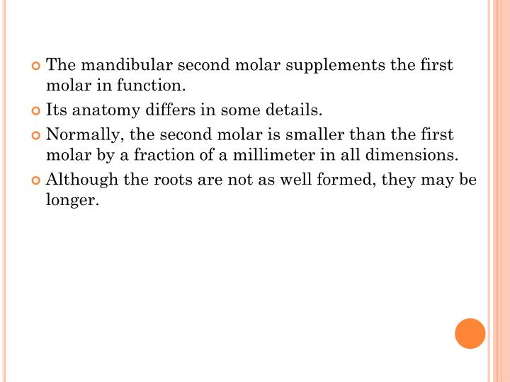 The mandibular second molar supplements the first molar in function.