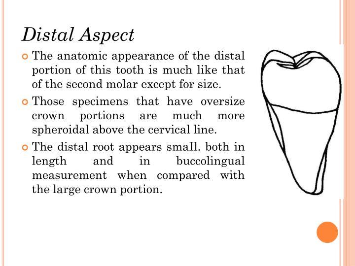 Distal Aspect