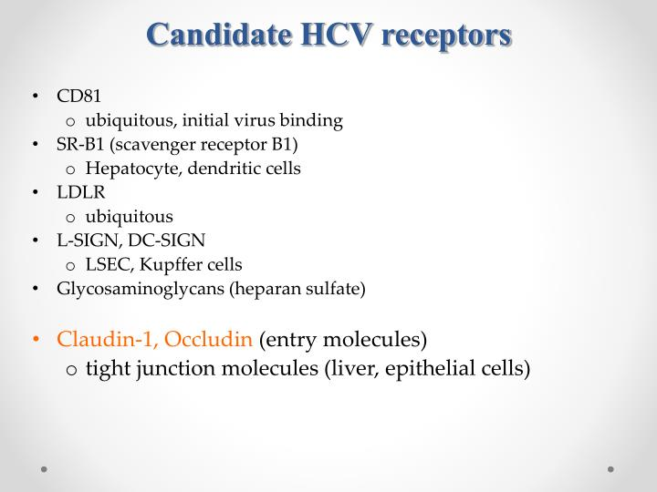 Candidate HCV receptors