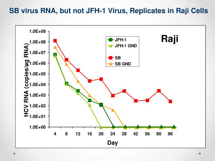 SB virus RNA, but not JFH-1 Virus, Replicates in Raji Cells