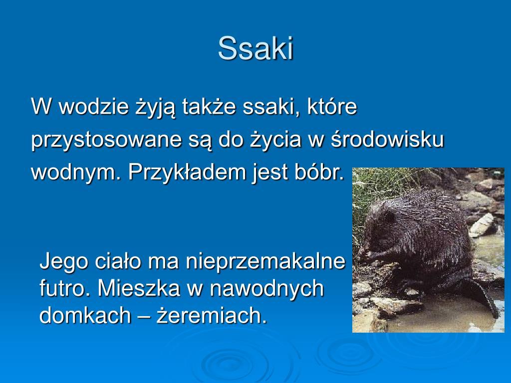 PPT - WODNY ŚWIAT ZWIERZĄT PowerPoint Presentation, free ...