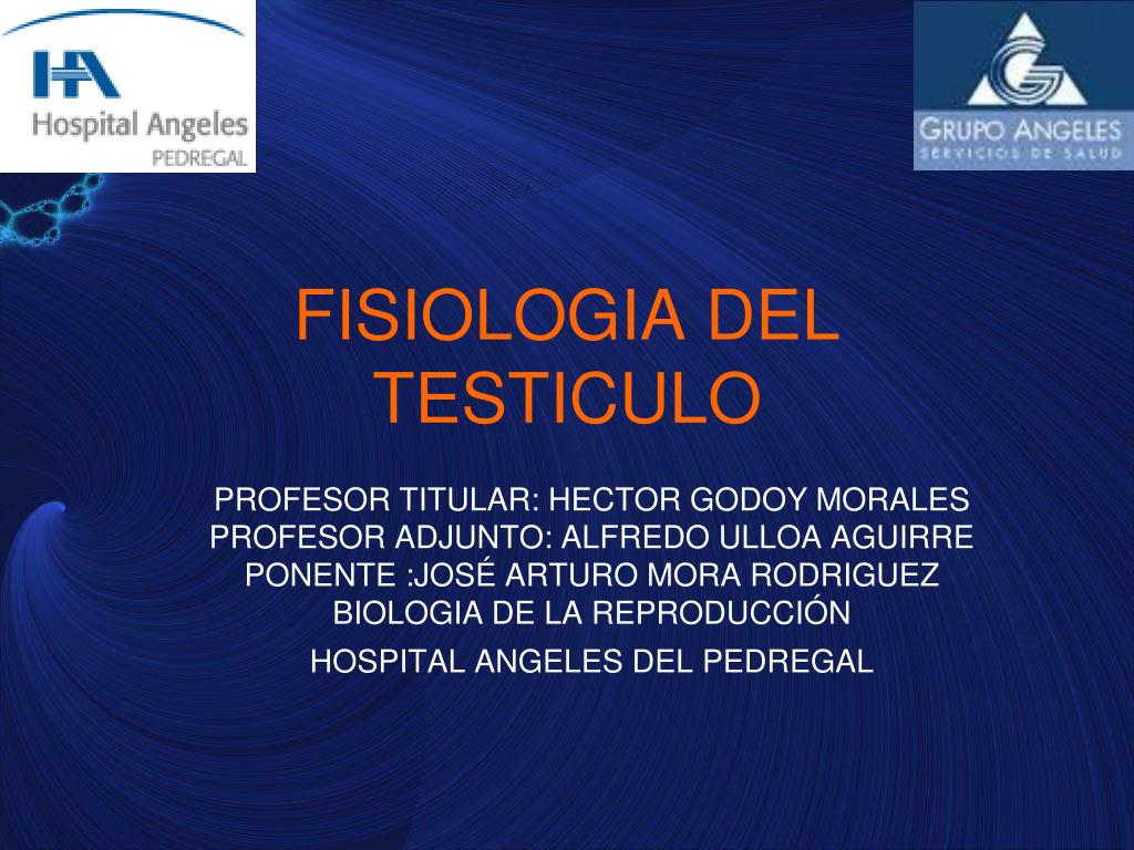 PPT - FISIOLOGIA DEL TESTICULO PowerPoint Presentation - ID:5142476