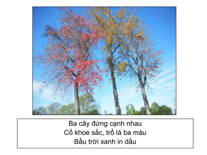 Ba cây đứng cạnh nhau