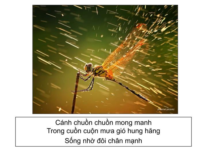 Cánh chuồn chuồn mong manh