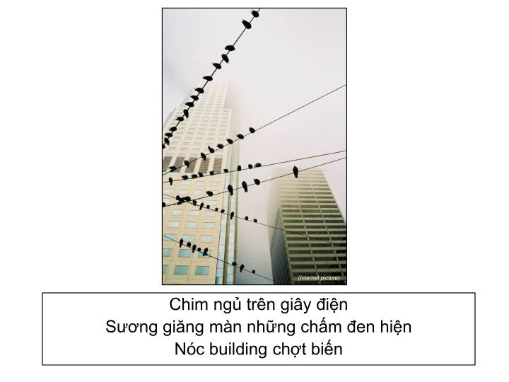 Chim ngủ trên giây điện