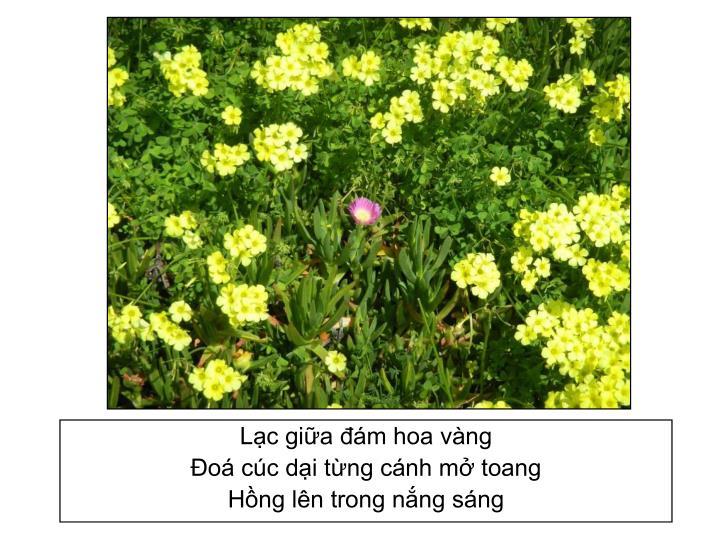 Lạc giữa đám hoa vàng