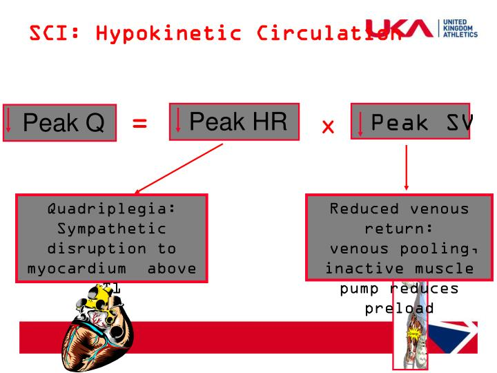 SCI: Hypokinetic Circulation