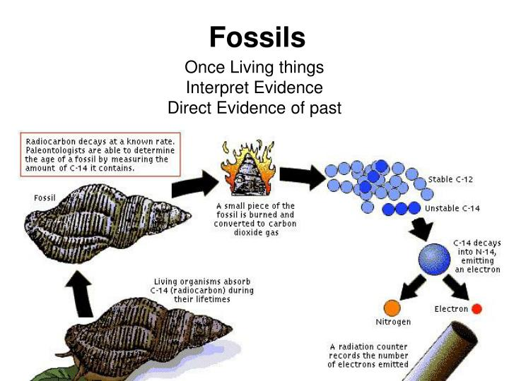 Carbon dating fossil records