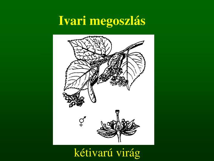 kétivarú virág