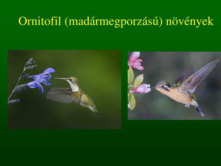 Ornitofil (madármegporzású) növények