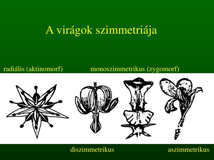 A virágok szimmetriája
