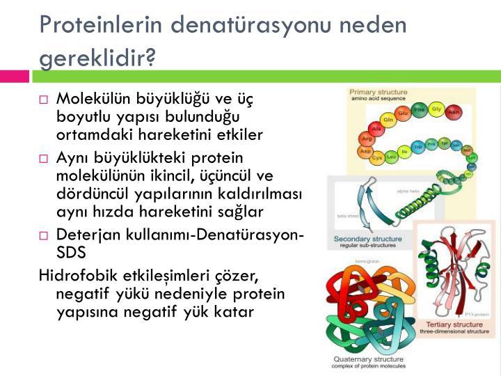 Proteinlerin denatürasyonu neden gereklidir?