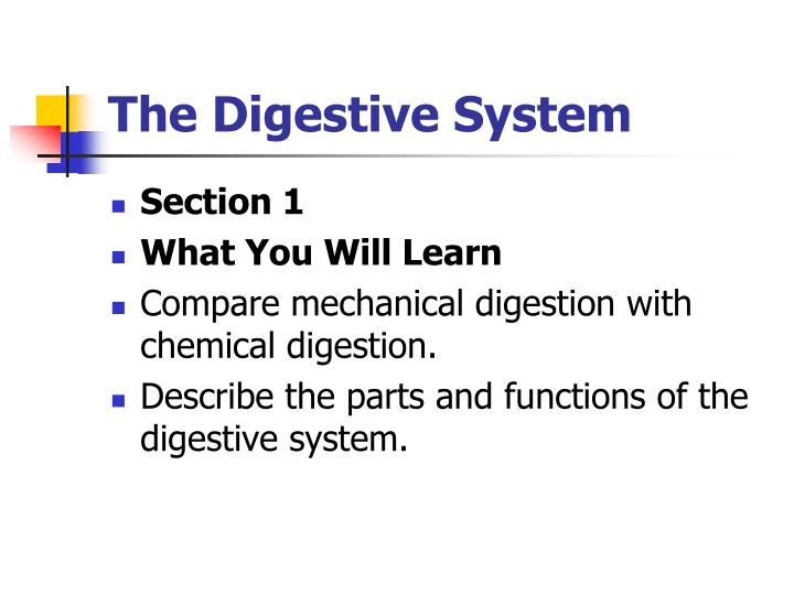 The digestive system1