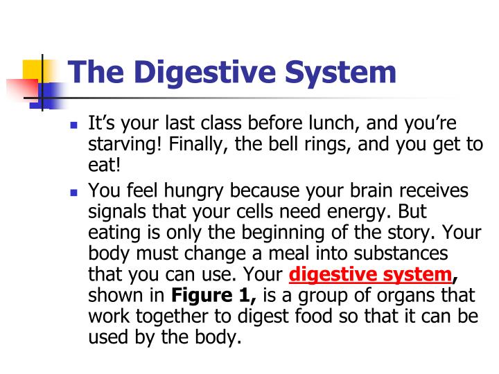 The digestive system2