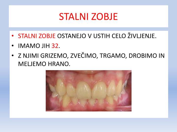 Stalni zobje