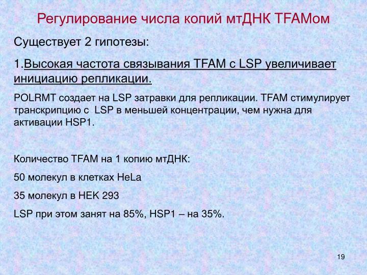Регулирование числа копий мтДНК