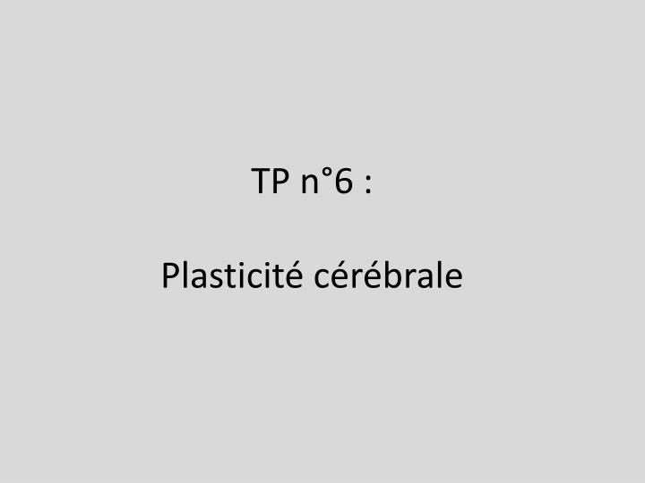 Tp n 6 plasticit c r brale